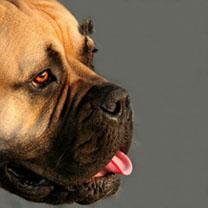 81_chien chaleur_resultat-85deaed1c9