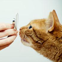 vétérinaire-image3
